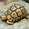 The meanings of Turtle/ Tortoise in your house